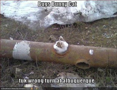 Bugs Bunny Cat