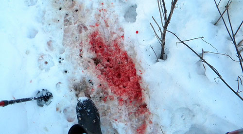 Bloody Deer Path