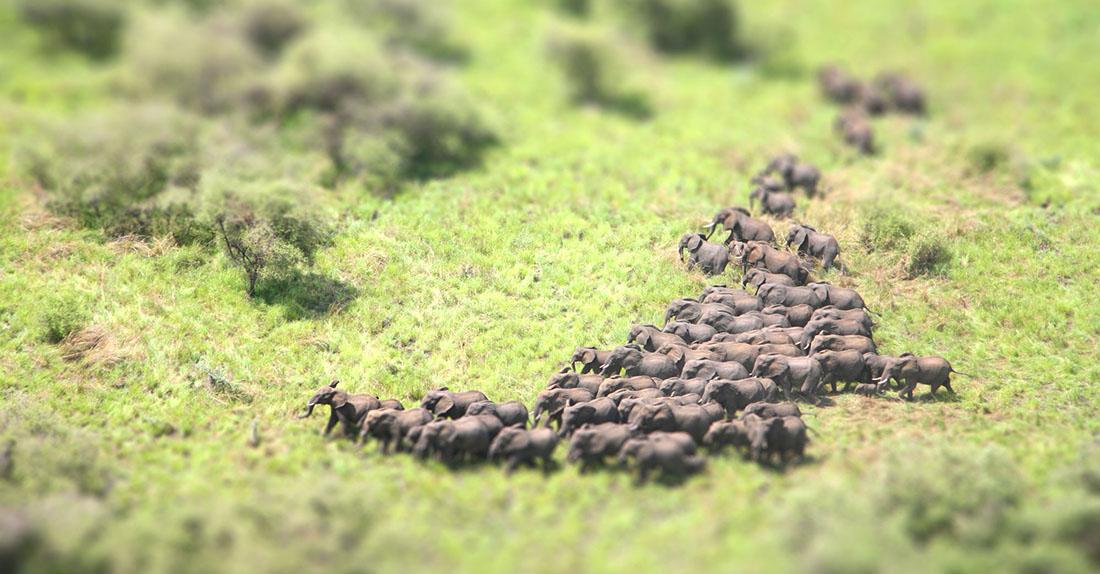 Herd in Miniature